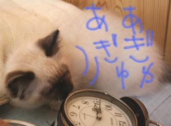 tokei_02g.jpg
