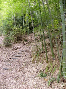bamboo-path.jpeg