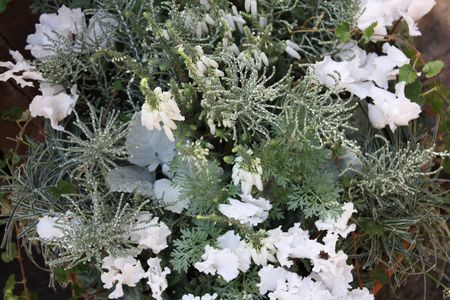 T's Garden Healing Flowers‐白いシクラメンの寄せ植え