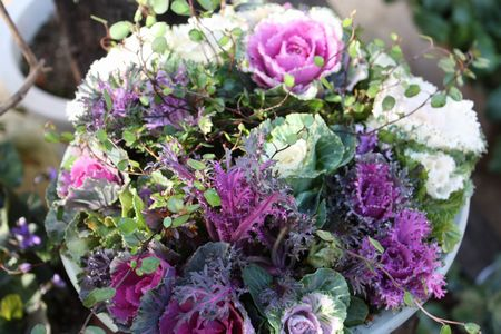T's Garden Healing Flowers‐ミニミニ葉ボタンブーケ