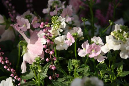 T's Garden Healing Flowers‐ピンクチックな冬の大鉢
