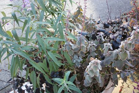 T's Garden Healing Flowers‐秋の寄せ植え(霜の跡)