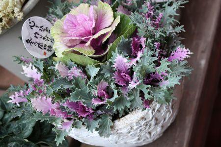 T's Garden Healing Flowers‐葉ボタン寄せ植え