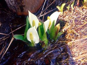 Flower1-004.jpg