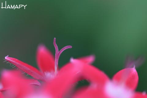 IMG_1482_edited-1.jpg