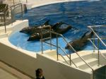 鹿児島水族館イルカ