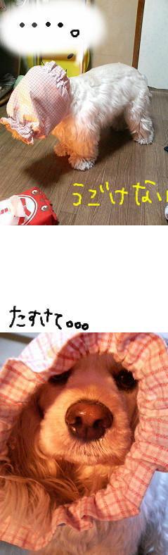 114357208000001676_060323_234057.jpg