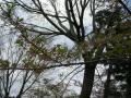中ノ島公園②