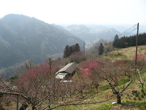 梅の里月ヶ瀬(奈良)