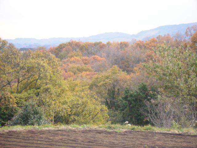 震生湖の黄葉116