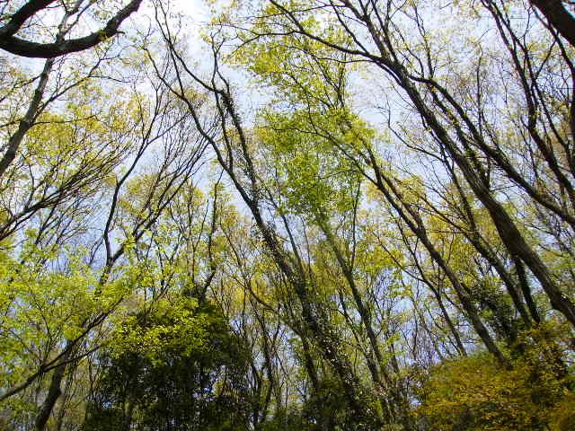 若葉の林124