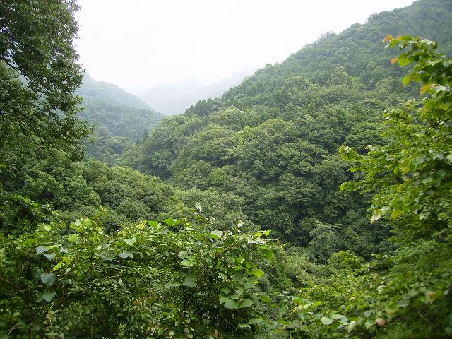 林道からの谷48