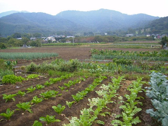 野菜畑58