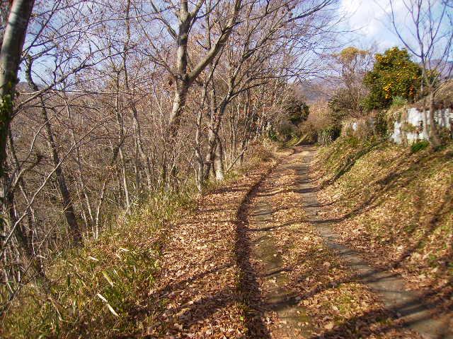 冬の山道10