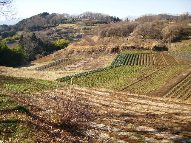冬の畑08