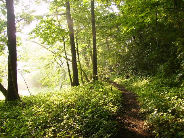 朝陽の林49