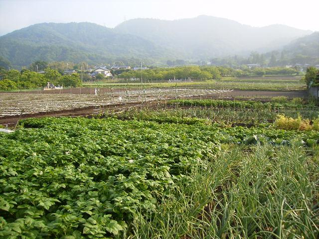 野菜畑29