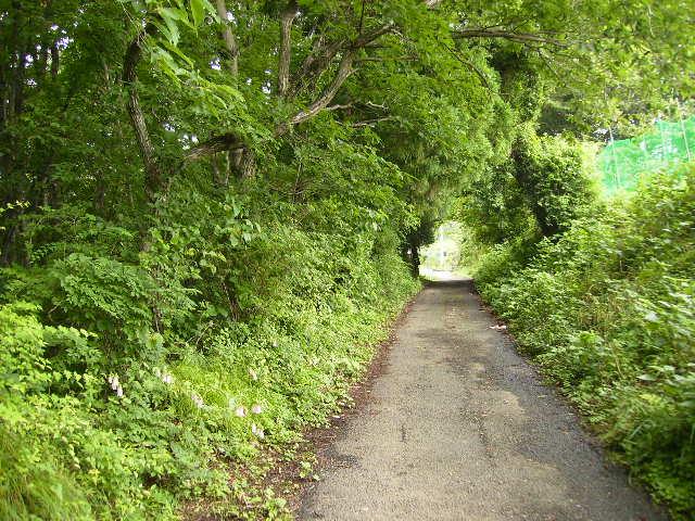 緑の林道17