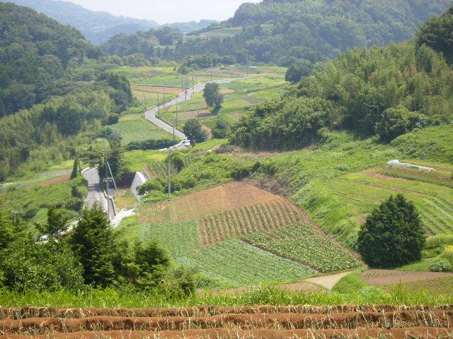 丘の畑102