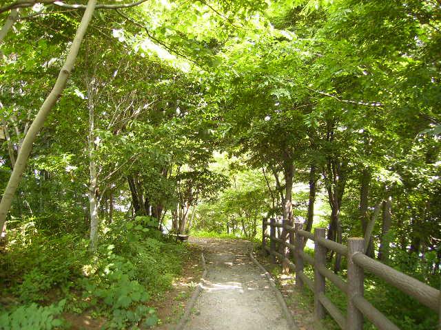 緑の遊歩道03