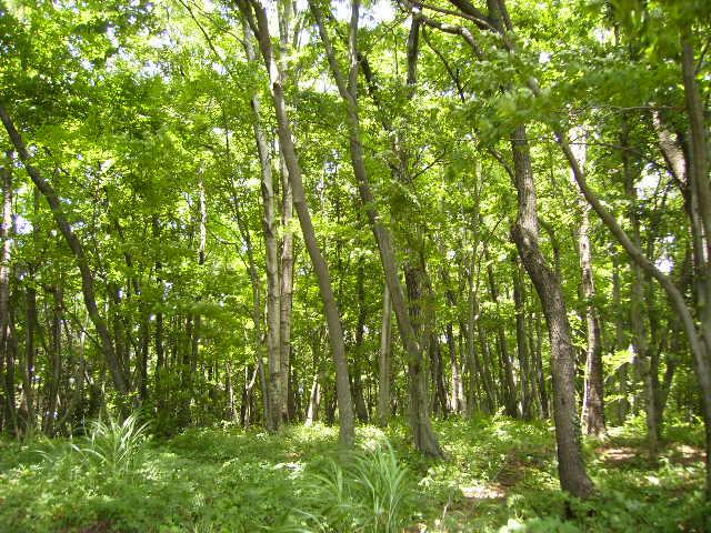夏のくぬぎ林70