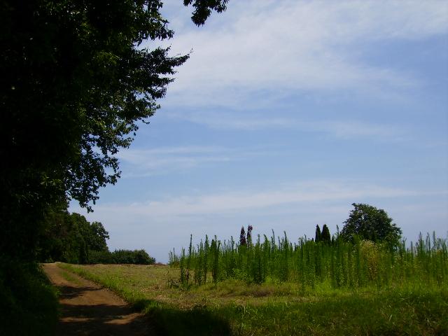 夏の山道108