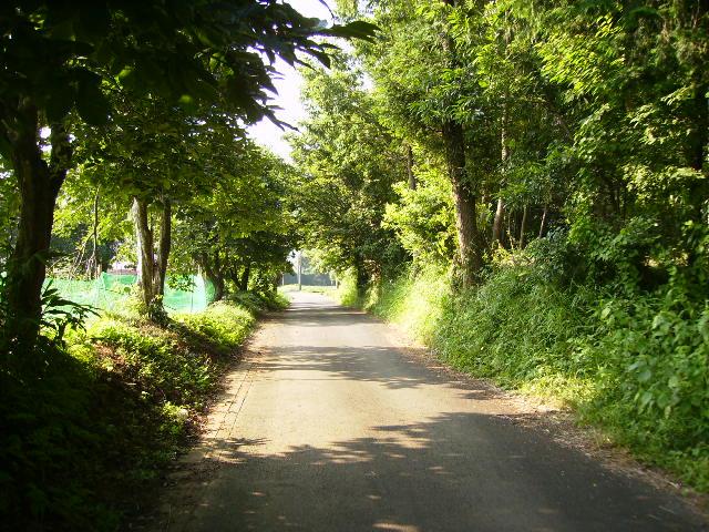 夏の農道71