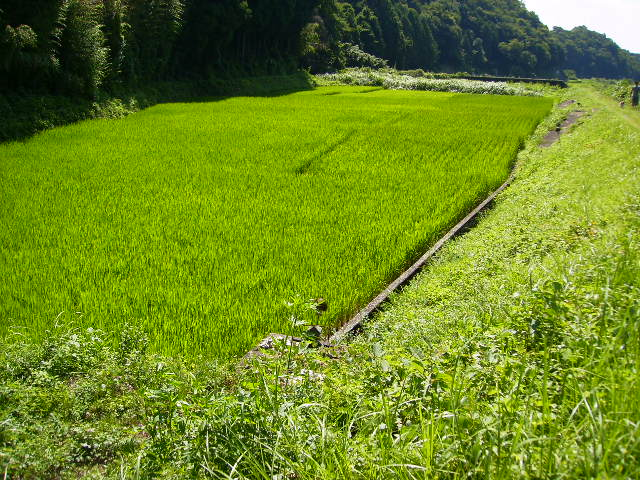 奥の稲田87