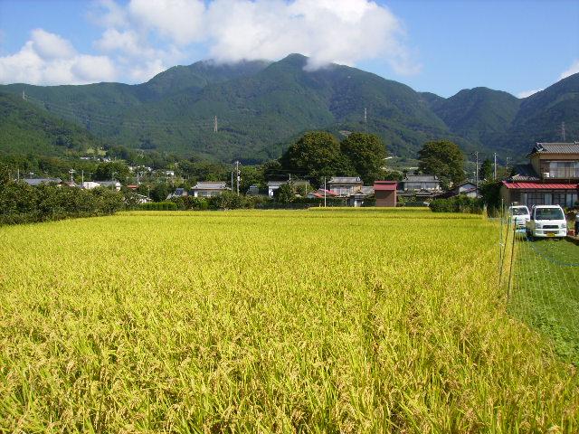 稲田と三の塔22