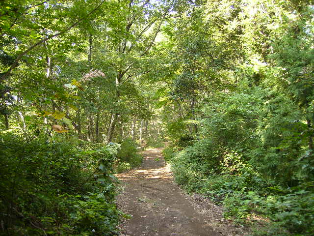 秋の山道39