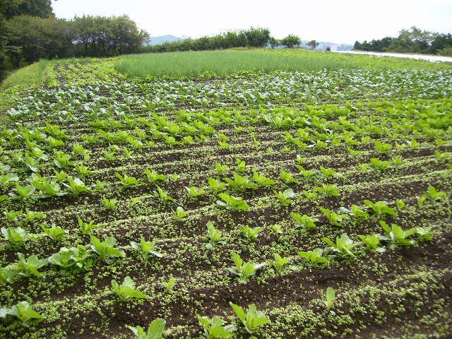 野菜畑12