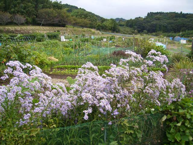 紫苑140