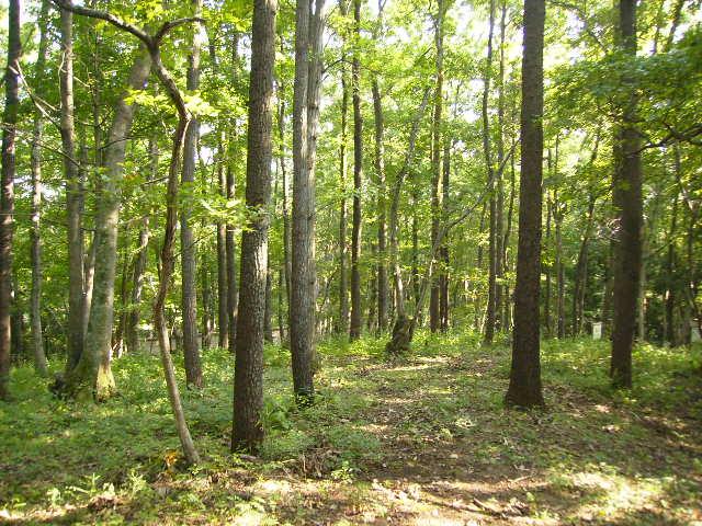 自然観察林37