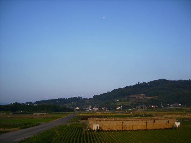月と藁干し29
