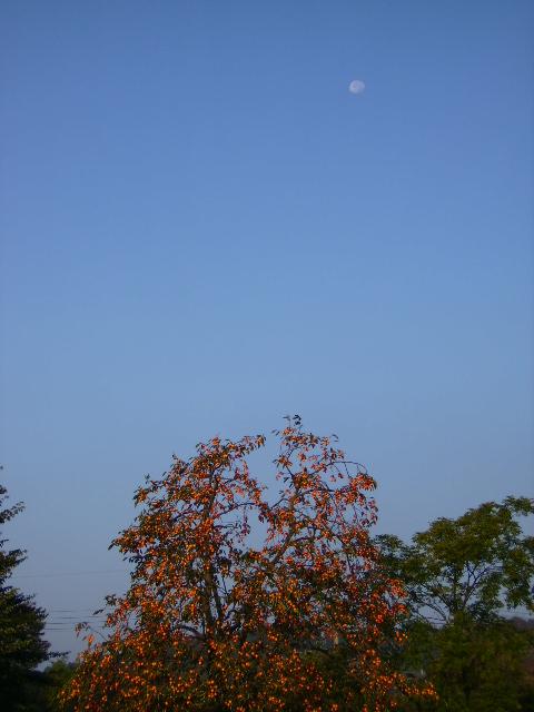 柿と月40