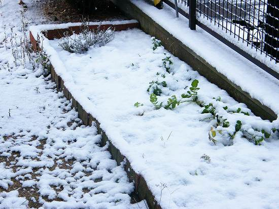 雪が積もったよ
