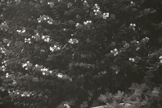 白くて小さな花