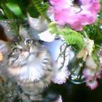ひめちゃんと花