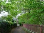 緑の散歩道