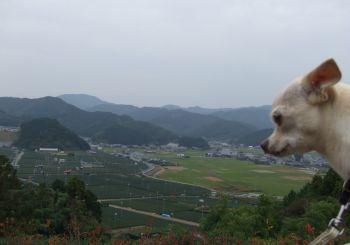 バラの丘8