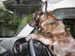 運転、運転、楽しいな