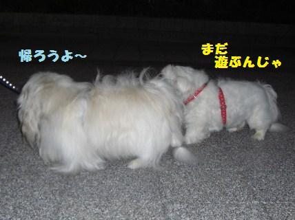 081019散歩1