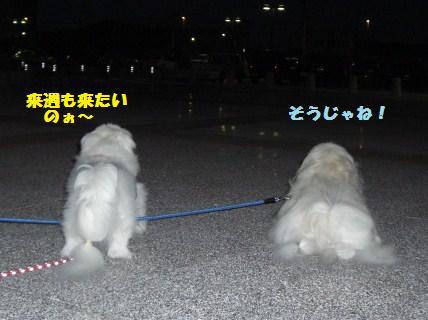 081019散歩3