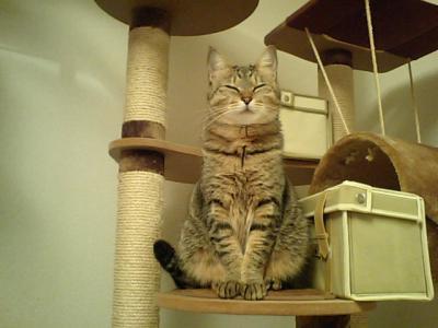 おちび猫正座