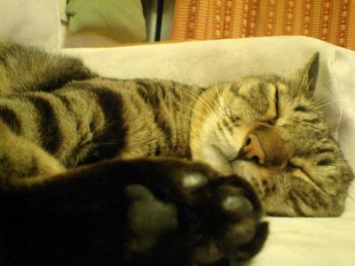 トラはソファで