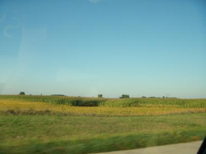 Illinois_cone_field01.jpg