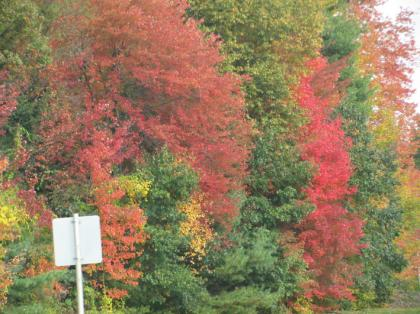 fall_foilage_NH209_01.jpg