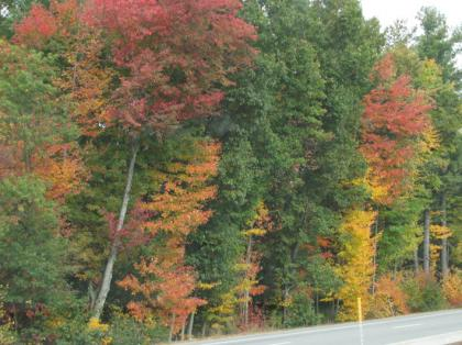 fall_foilage_NH209_02.jpg