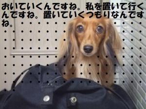 001_20081109194937.jpg
