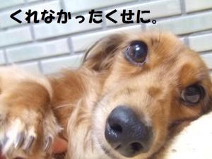 003_20081116192250.jpg